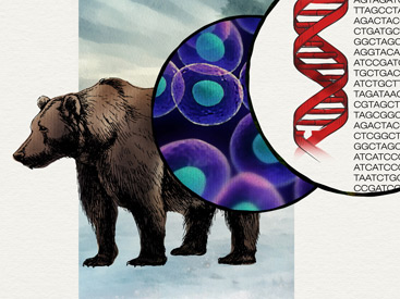 Bear with DNA