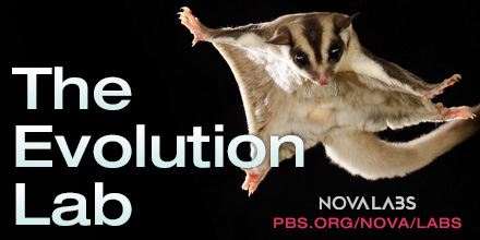 Evolution Lab | NOVA Labs | PBS